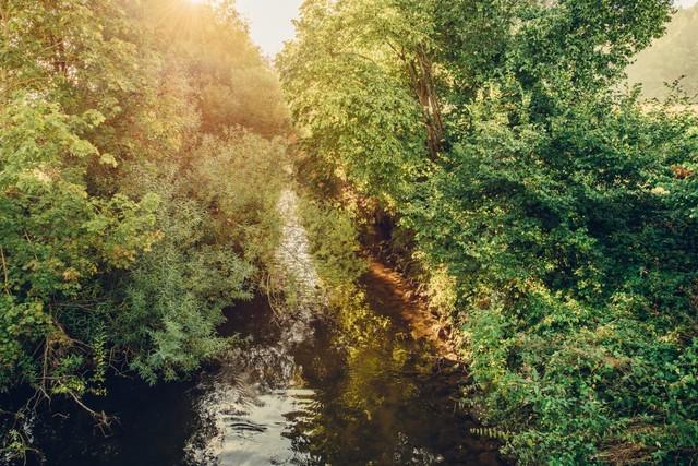 Fluss im Grünen