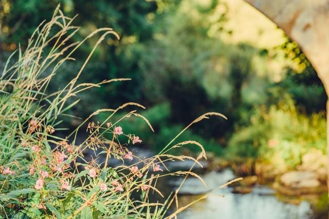Flora an der Jagst